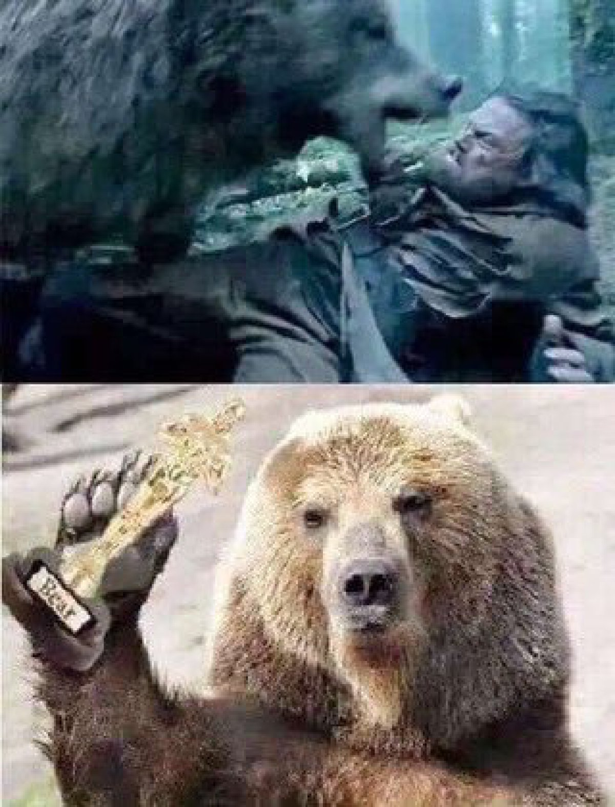 Memes Oscar 2016
