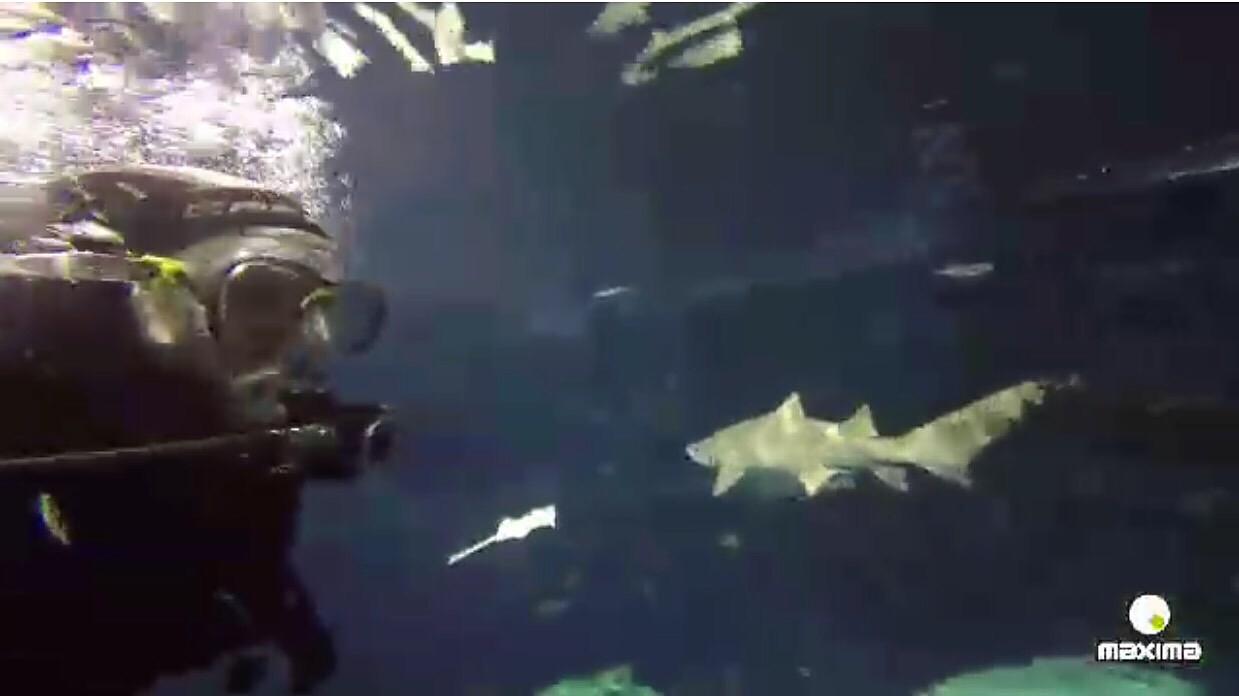 Jose AM entre tiburones!